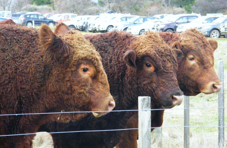 Beef +  Lamb New Zealand Genetics is developing research and development genetic research...