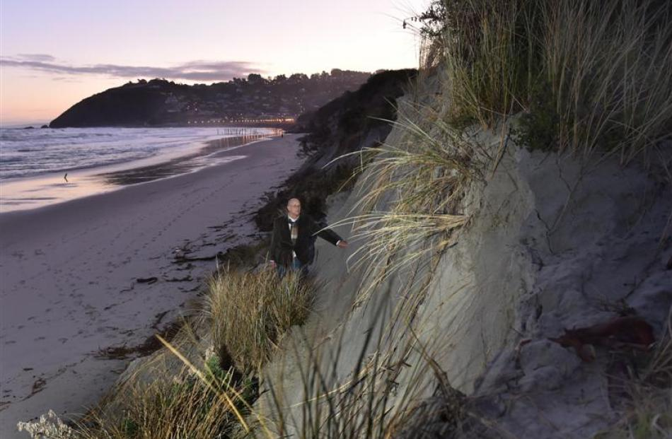 St Clair resident Bill Brown at the foot of the steep face that has formed at St Clair Beach....