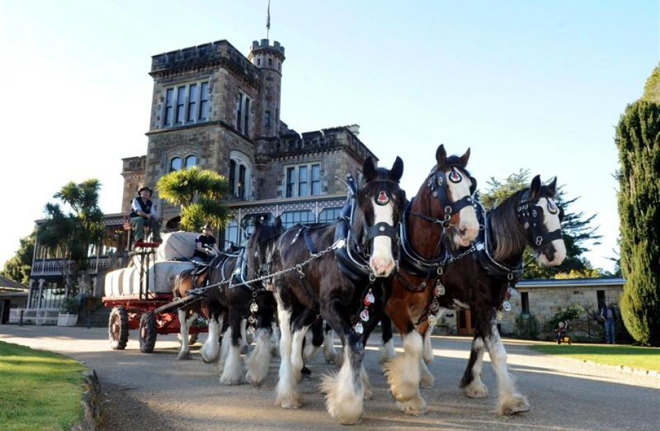 Clydesdales (from left) Major, Connor and Dark lead the way under the guidance of Erewhon Station...