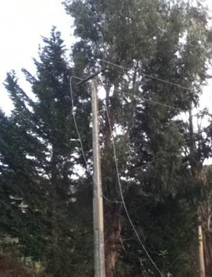 Danica Davies sent these pictures after wind blew over a tree which took out power lines on...