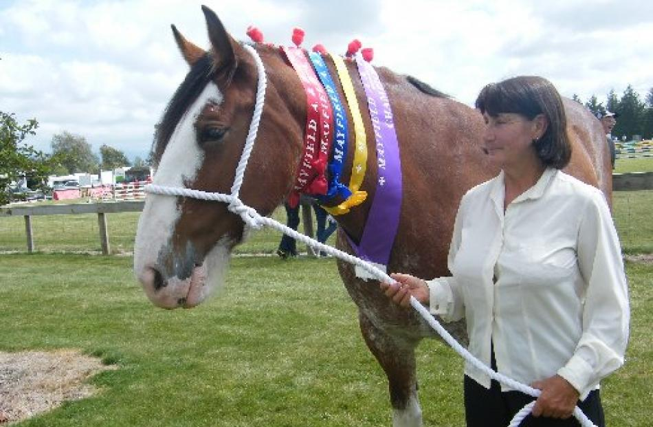 Dayboo Amy was the champion Clydesdale at the Mayfield Show. She awaits her turn in the grand...