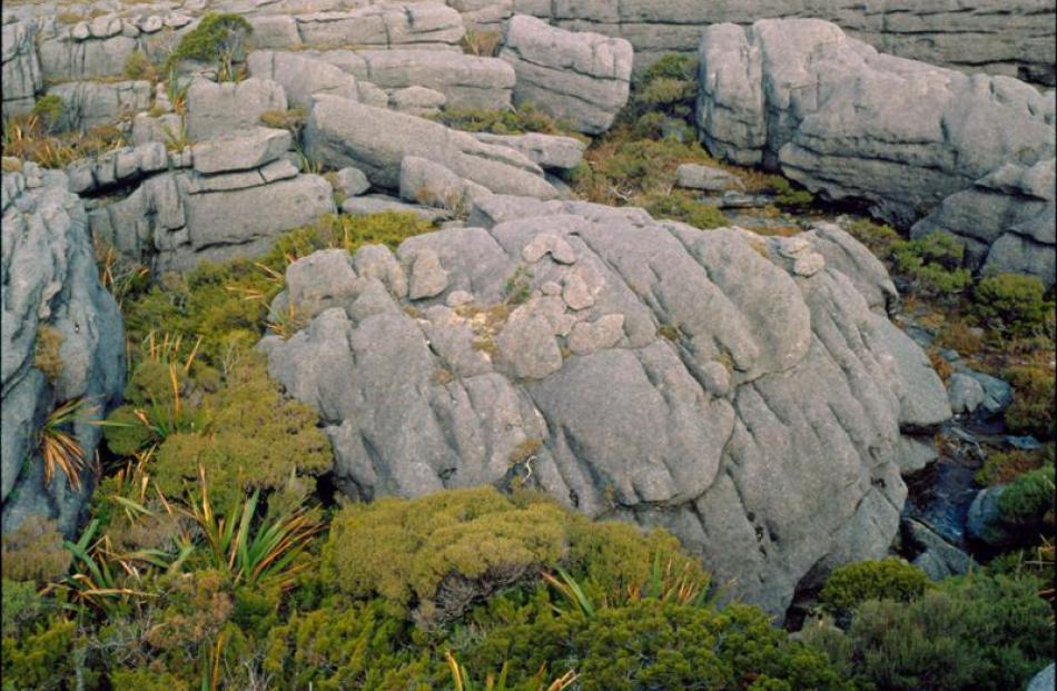 Denniston Plateau is a unique landscape and is home to rare life-forms such as <i>Powelliphanta...