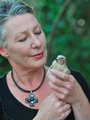 Dunedin resident and Otago Polytechnic cookery lecturer Julie Feary-Law holds one of her quails,...