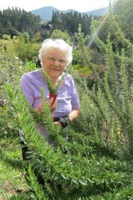 Dunedin RSA member Gladys Nilson makes about 6000 rosemary posies for Anzac  Day every year. ...