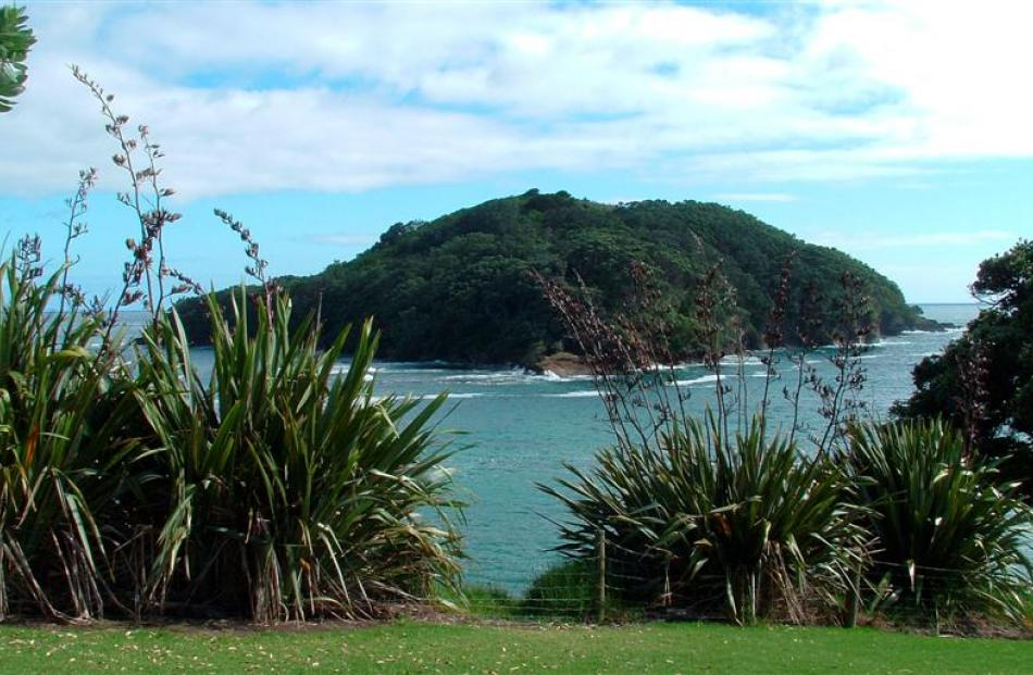 Goat Island, the site of New Zealand's first marine reserve. Photo from Wikipedia.