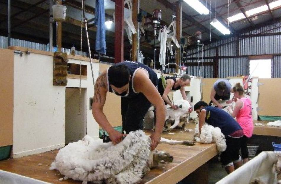 Grant Murdoch Shearing's gang works at pace to process Bog Roy Station's merino wool clip.