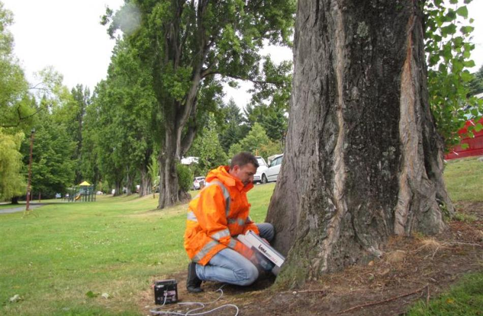 GreensceneNZ Ltd arborist Samuel Earp, of Auckland, uses a resistograph to test the trunk of a ...