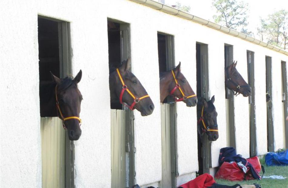 Horses wait for their races.