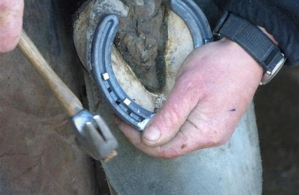 Farrier Mark Isaacs says the foot is a window into a horse's overall health. Photos by Matt Smith