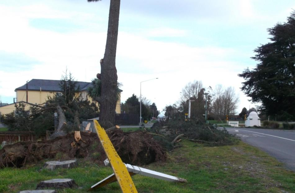 It was not just trees  uprooted throughout Canterbury last 