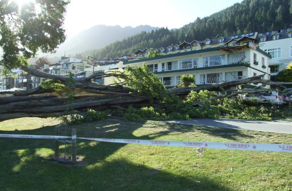 Lake Esplanade, Queenstown, is blocked by a poplar tree which crashed across the road, hitting...