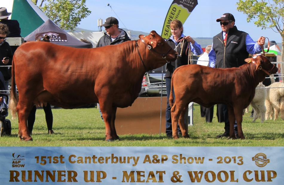 Liz and Anton Gibson are only one of two Santa Gertrudis breeders in the South Island and breed...