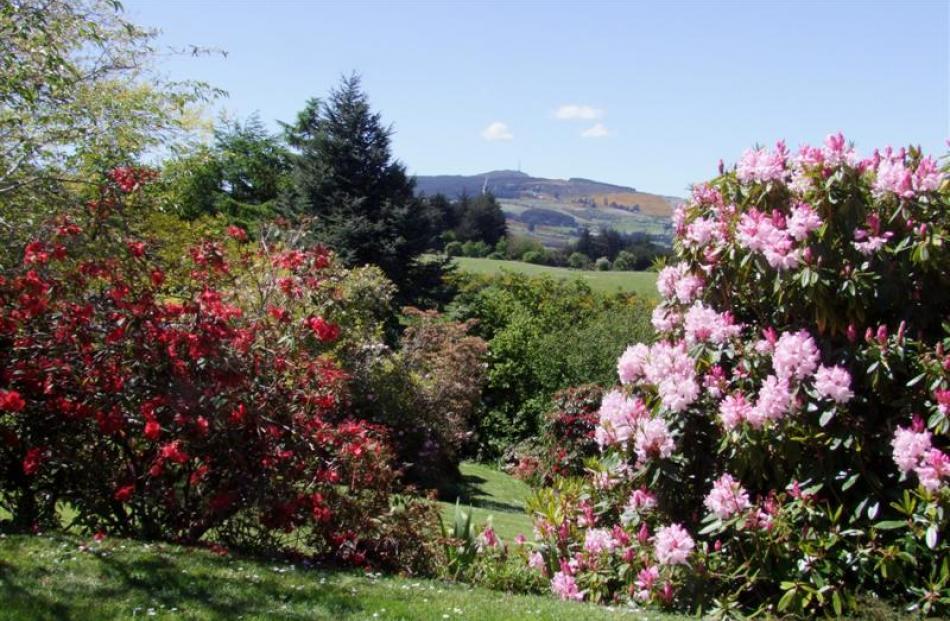 Looking across the Carey-Smith garden to Mt Cargill.