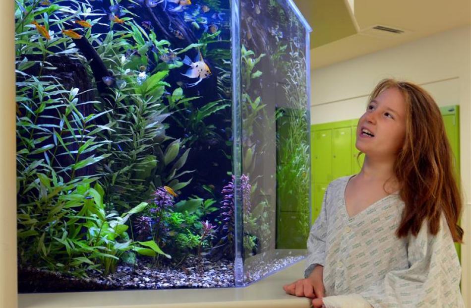 Maggie Hepburn (8), of Dunedin, enjoys the tropical fish tank in the children's ward at Dunedin...