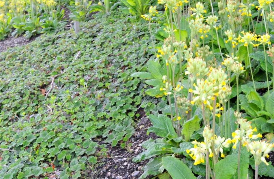 Mass Planting Or Ground Cover Are Good Ways To Suppress Weeds In Your Garden