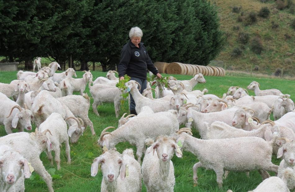 Mohair goat breeder and fibre classer Irene Campbell, of Dumbarton, along with her husband Bill,...