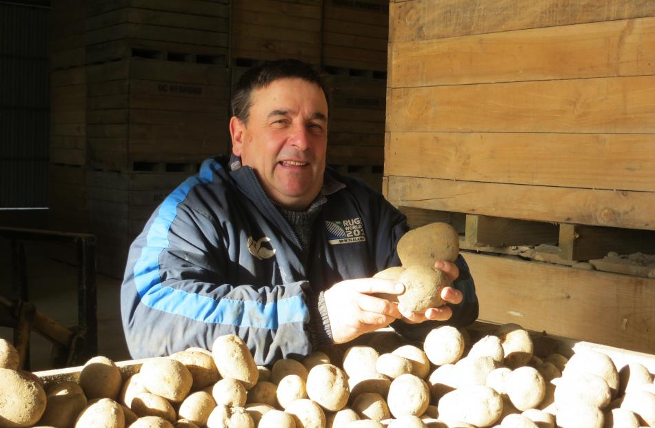 New member of the Potatoes New Zealand board, David Redmond, with a bin of Nadine potatoes. He...