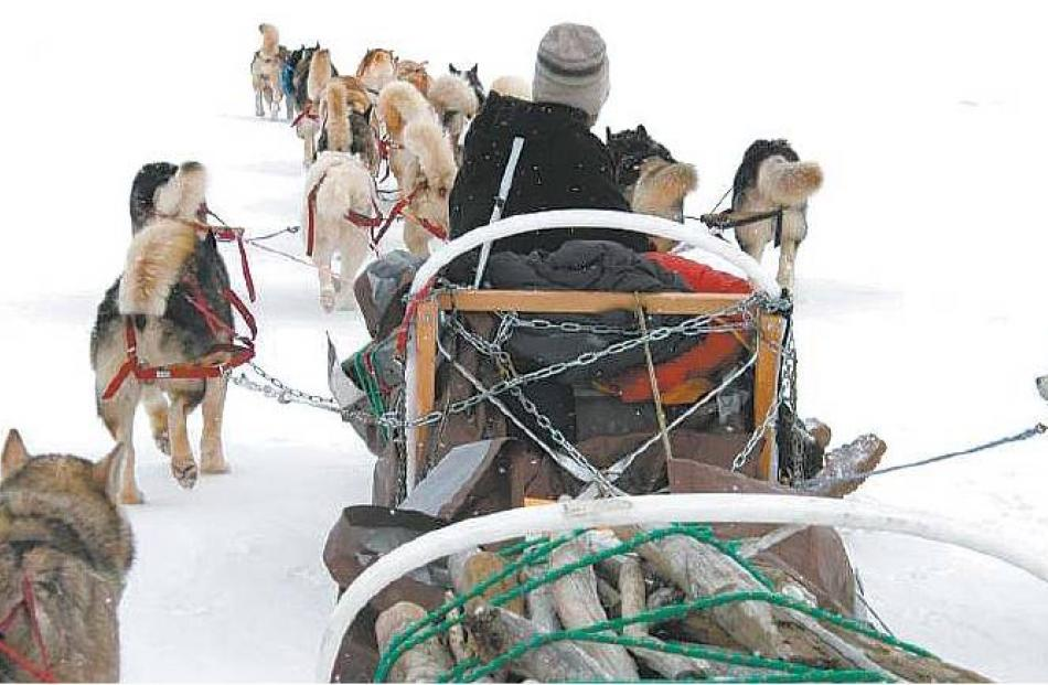 No looking back: Joe Henderson drives his team of Alaskan malamutes into the Arctic snow....
