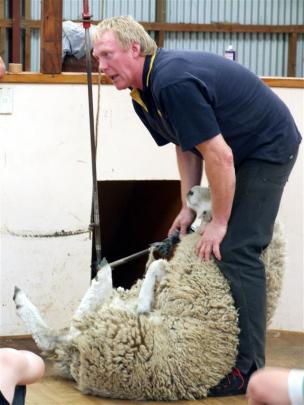 Norm Harraway demonstrates the correct way to shear a sheep. Photos by Sally Rae.