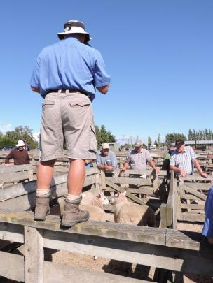 North Otago farmers contemplate this week's pens at the Waiareka stock sale. Photos by Sally...