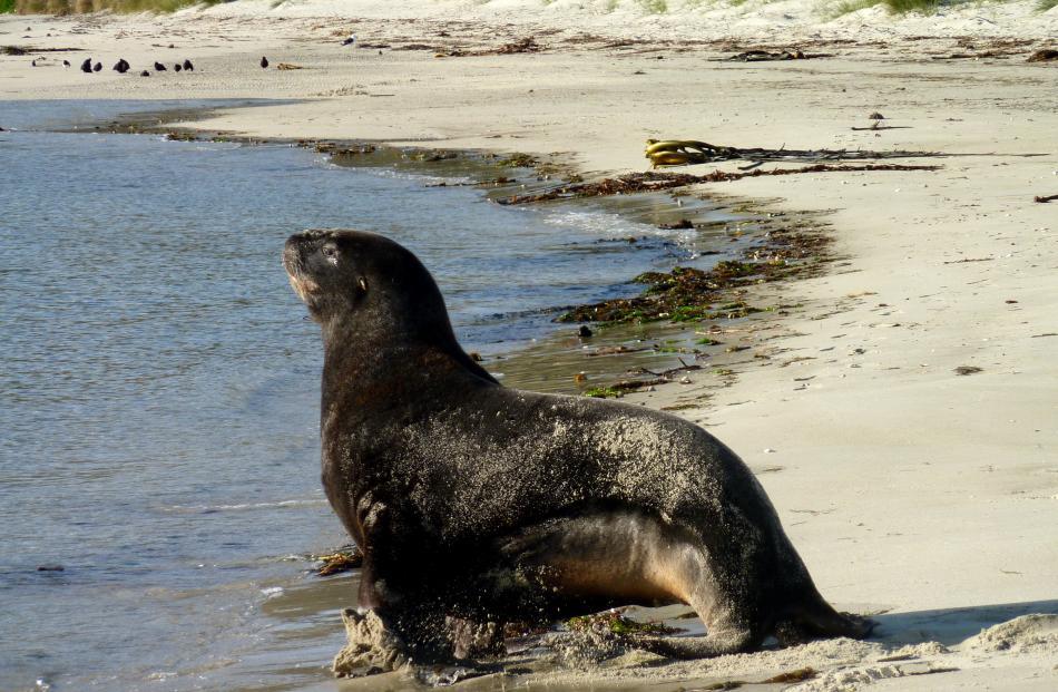 otago_peninsula_s_abundance_of_wildlife_4f29a173c5.jpg