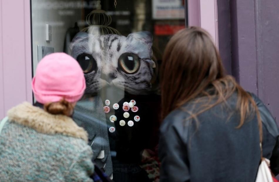 Pedestrians look at a window display at Lady Dinah's Cat Emporium in London. Photos: REUTERS...