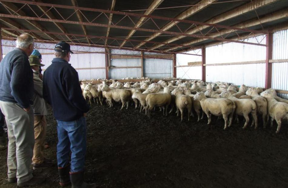 Perendale conference attendees view sheep in the covered yards at the Gardner family's South...