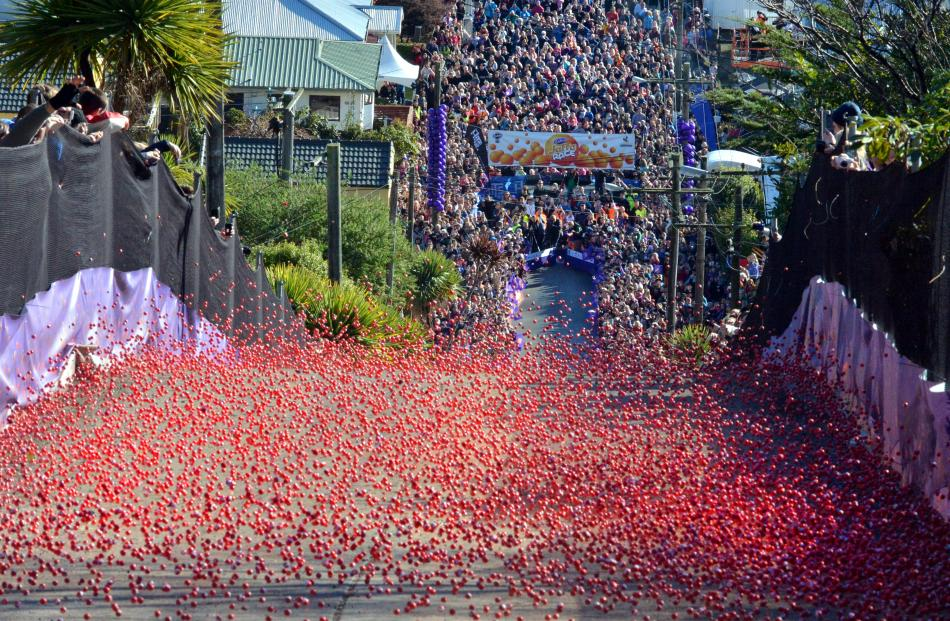 Thousands of Jaffas tumble down the world's steepest street during Dunedin's annual Jaffa race....