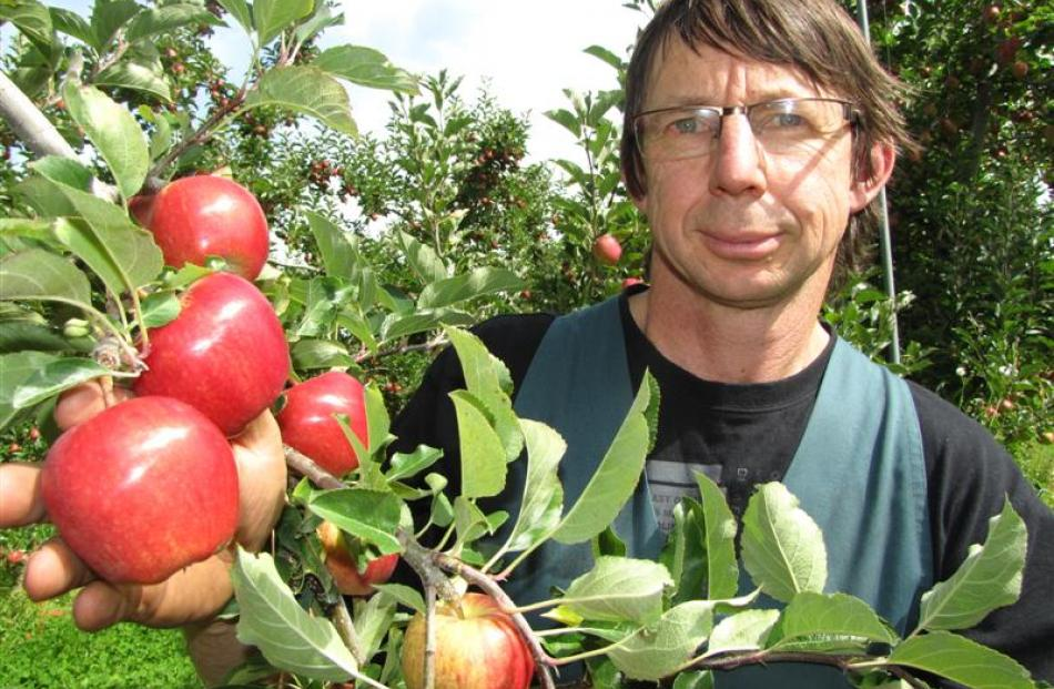 Pipfruit New Zealand director and Ettrick apple grower Stephen Darling with some of his Royal...