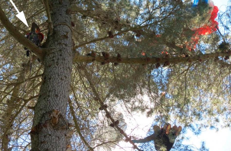 Queenstown arborist Abe Laguna (arrowed, left) climbs a pine tree to reach stranded parapenter ...