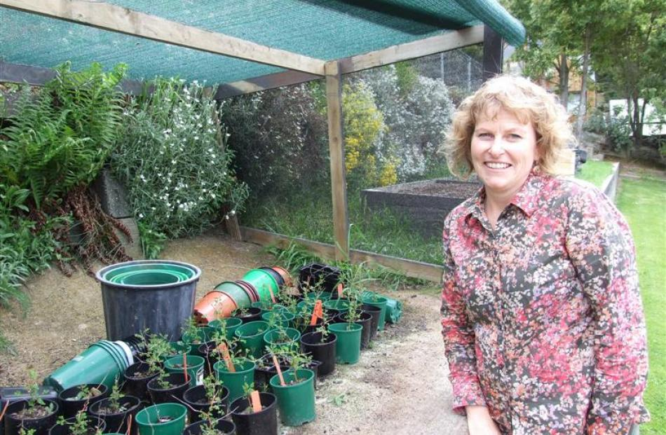Queenstown Primary School teacher Nicky Gray with year-old kowhai plants which will eventually be...