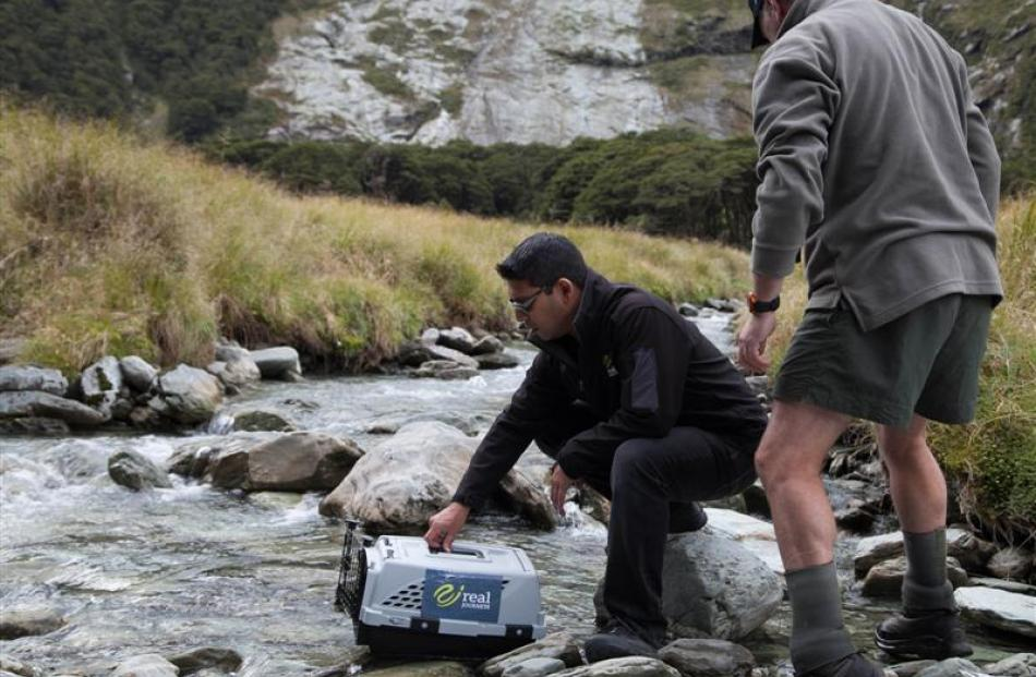 Real Journeys marketing manager Ajit Pilo (left)  and Andrew Smart, from Doc Te Anau, release a...