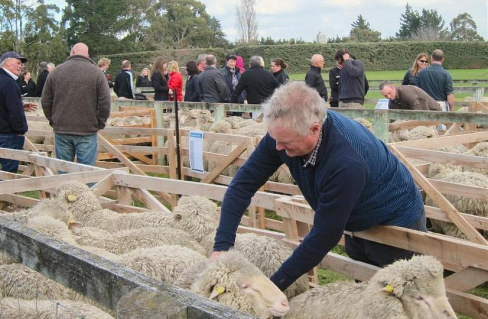 Ross Ivey, of Glentanner Station, inspects sheep on display at an open day for the New Zealand...