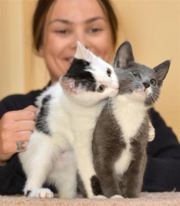 SPCA Otago animal manager Grace Hepburn, with kittens available for adoption from the Opoho...