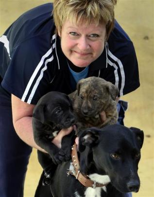 SPCA Otago chief inspector Virginia Pine holds the abandoned dog and pups at the SPCA in Dunedin....