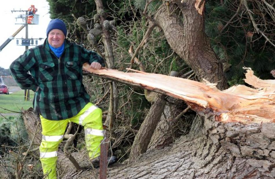 Taieri farmer Philip Wilson stands next to the tree that severed power lines on Saturday. In the...