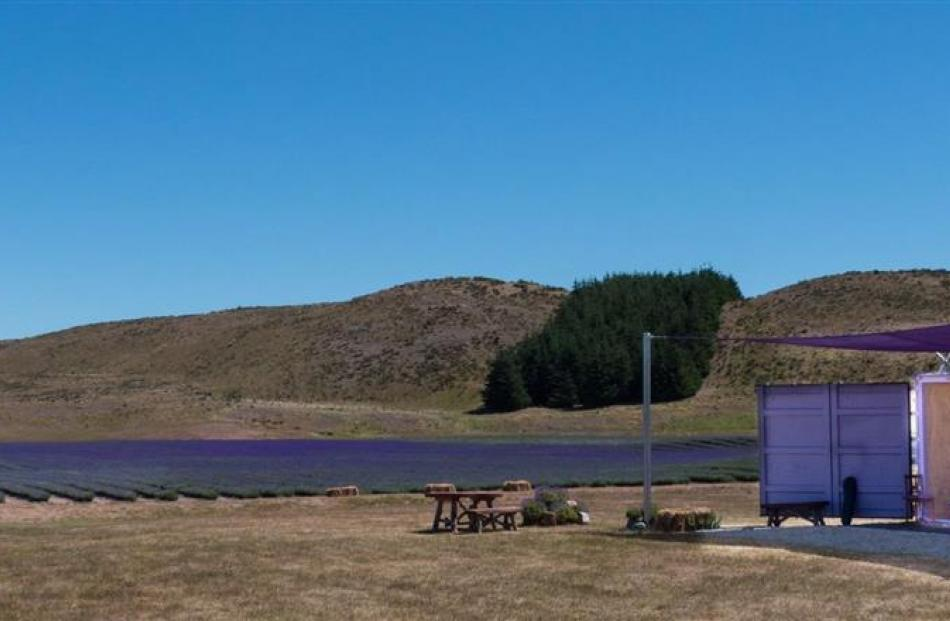 The farm shop at the  New Zealand Alpine Lavender organic farm in the Mackenzie district. Photos...