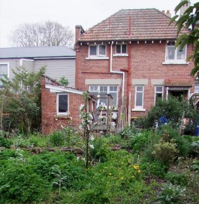 The George St garden is crammed with fruit and vegetables. Photos by Gillian Vine.