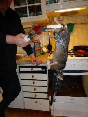 The giant rat. Photos: Facebook