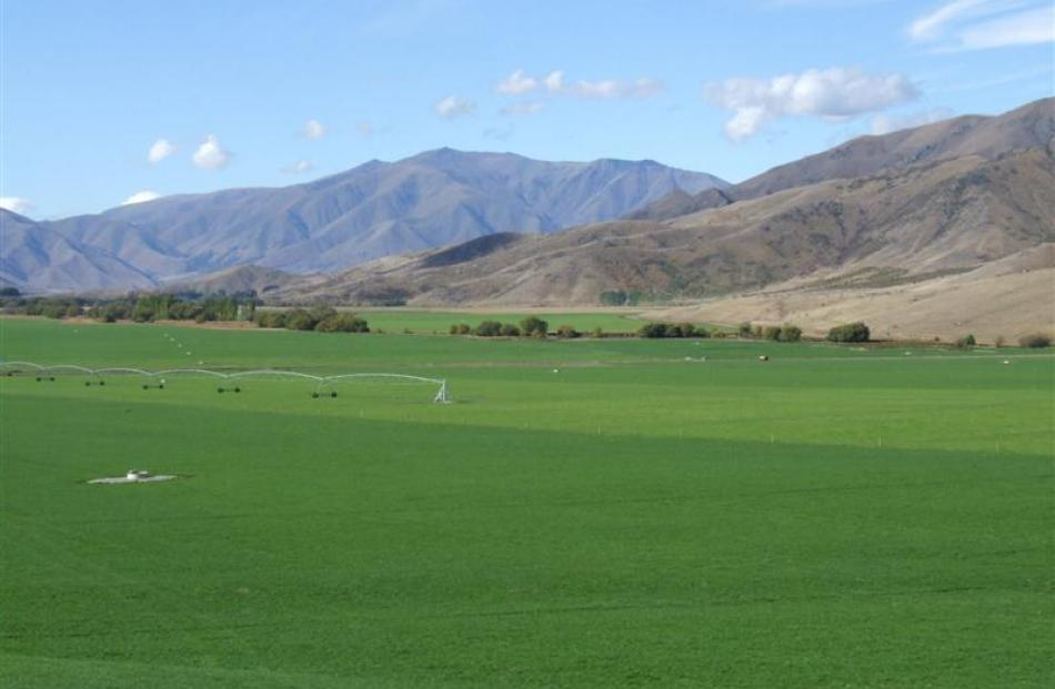 The irrigated flats at Tara Hills make a stark contrast to the surrounding brown hills near...