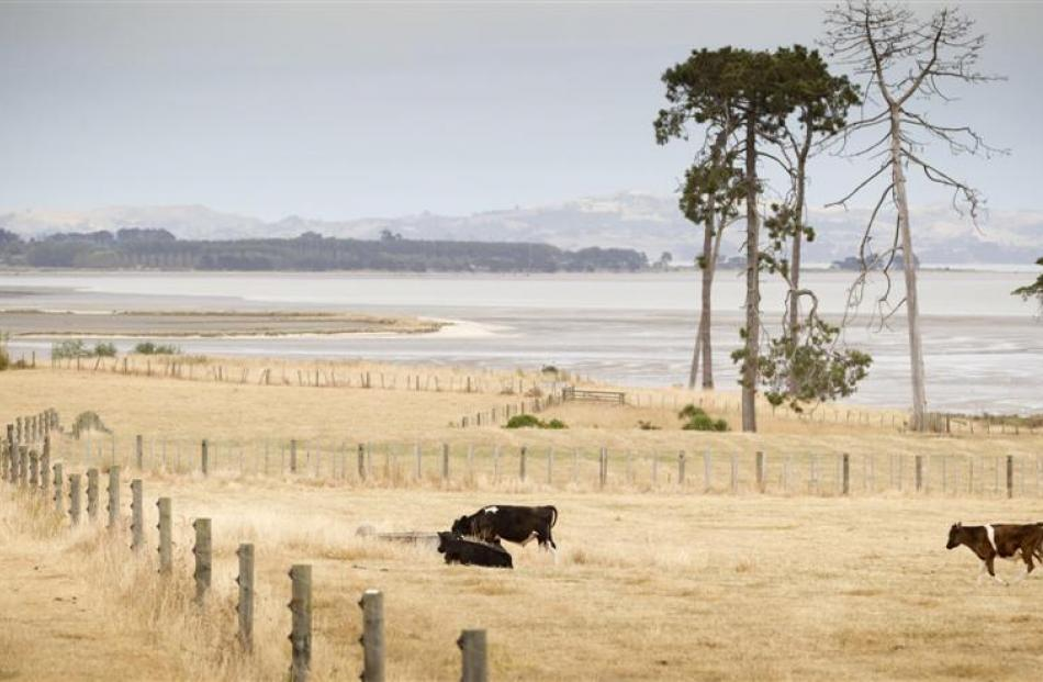 Tinder-dry fields near Auckland earlier this year. Photo from NZ Herald.
