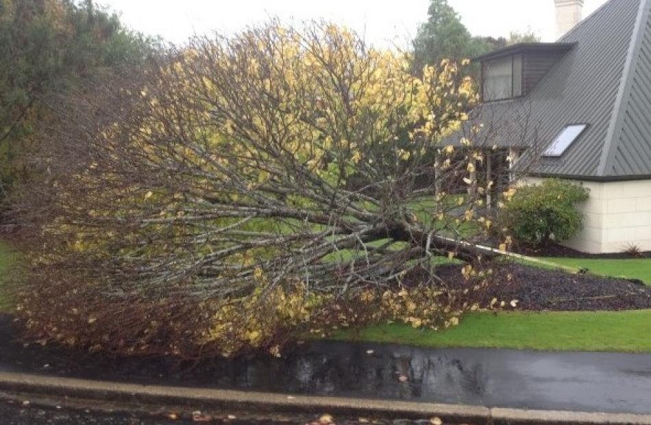 Tracey Mains sent this picture of a tree that blew over in Fairfield at 4.30am.