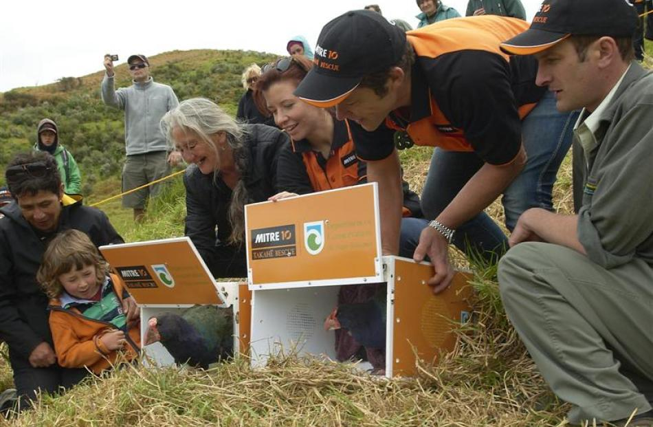 Two of  nine takahe released on Motutapu Island, with representatives of iwi connected to...