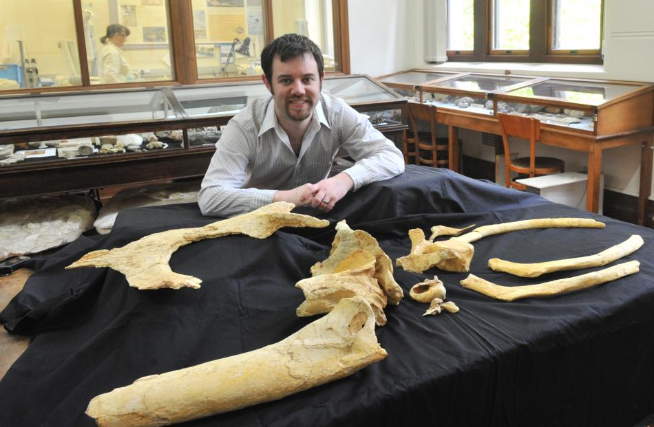University of Otago geology researcher Robert Boessenecker looks at ancient 'Dawn Whale' fossil...