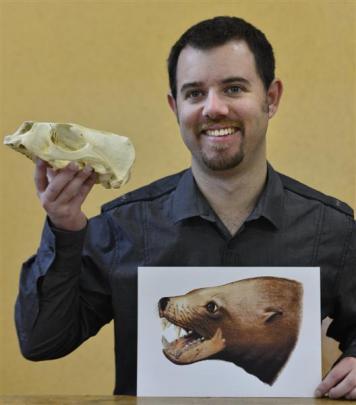 University of Otago PhD student Robert Boessenecker holds a modern New Zealand fur seal skull and...