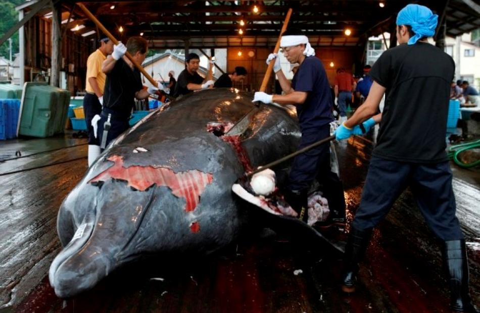 Workers butcher a Baird's beaked whale at Wada port in Minamiboso, southeast of Tokyo. REUTERS...