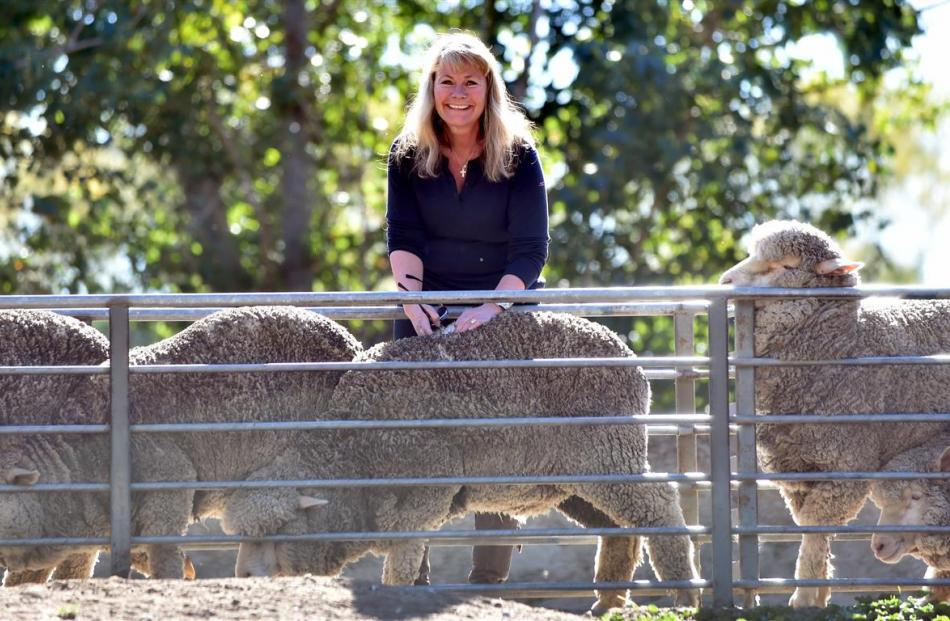 Devold chief executive Cathrine Stange inspects merino sheep on display at the Paterson family's...