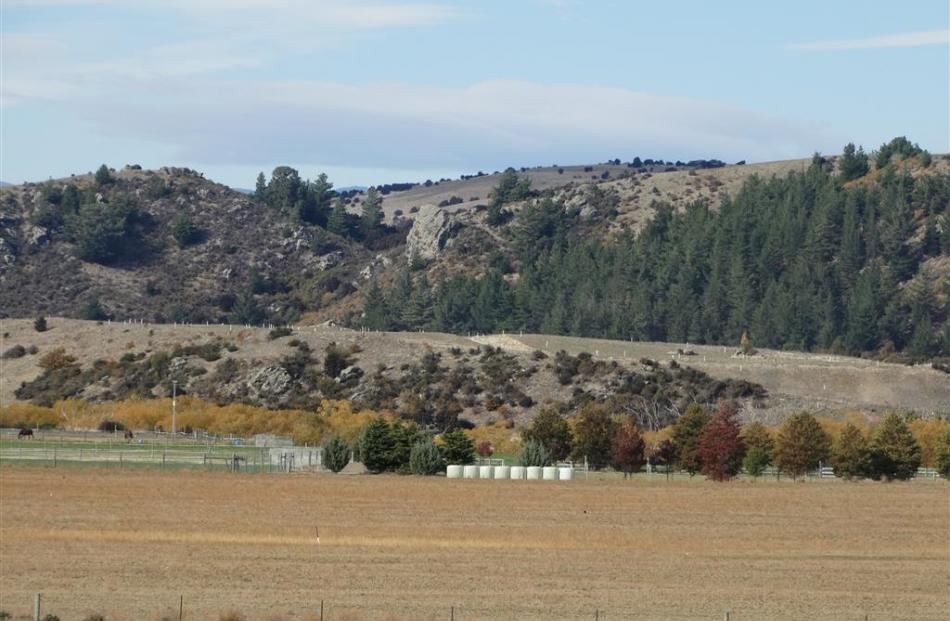 The Luggate Heights ''plateau'' where sections are being offered for sale at prices up to $495...