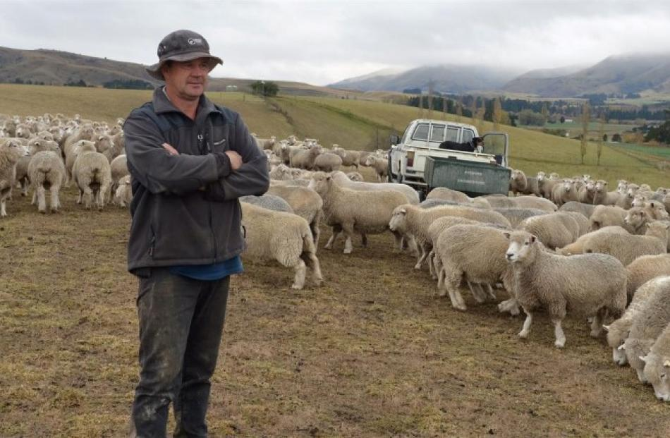 With no grass, Dunback farmer Ken Fergusson is feeding barley to his ewes. Photo: Stephen Jaquiery