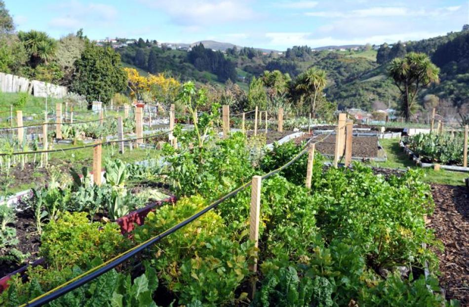 The Northeast Valley Community Garden. Photo: ODT